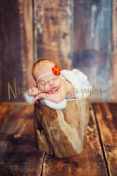 Isobel | Newborn