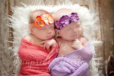Lamb Newborn Twins