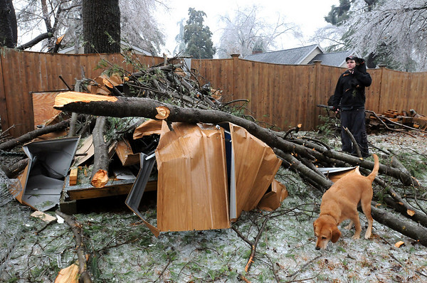 Amesbury:<br /> Several pine limbs fell on a shed at Rich Worsley's family's home on Second Street in Amesbury.<br /> Photo by Bryan Eaton/Newburyport Daily News Friday, December 12, 2008