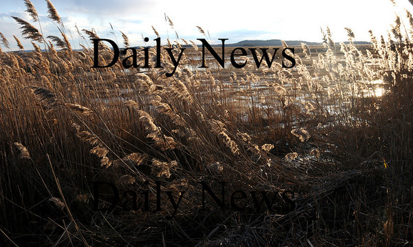 Newbury:<br /> Wind blows the phragmites along the Plum Island Turnpike on Monday afternoon as a cool spell is in store for the week.<br /> Photo by Bryan Eaton/Newburyport Daily News Monday, November 17, 2008