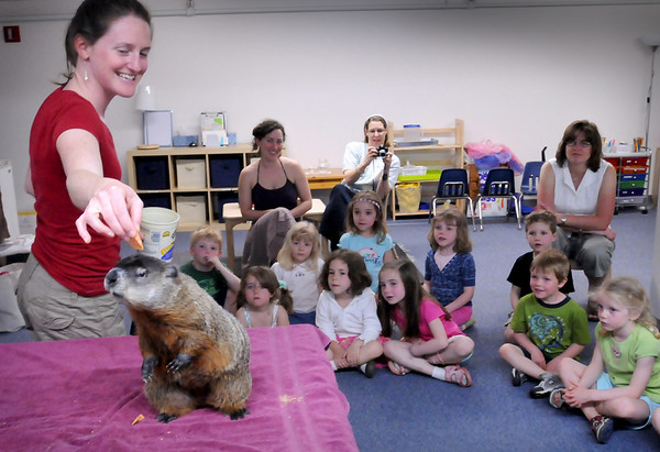 Newburyport: Leah Titcomb gives a groundhog a piece of sweet potato during a presentation at the Newburyport Montessori School on Tuesday morning. She's from Chewonki in Wiscasset, Maine which introduces children to their travelling natural history program. Bryan Eaton/Staff Photo  Newburyport News  Tuesday April 28, 2009.