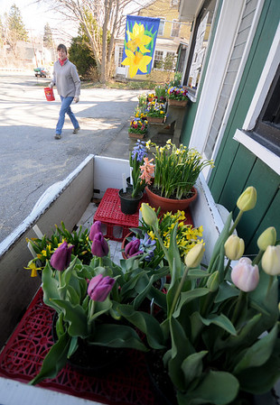 West Newbury: Kim Mosley puts out flowers at Knapp's Green house in West Newbury early Tuesday morning.Jim Vaiknoras/Staff photo