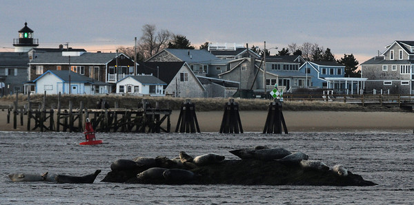 Salisbury: Seals hualed up on rocks near Salsibury Beach Reservation enjoy some Easter morning sunshine Sunday morning.Jim Vaiknoras/Staff photo