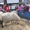 Newburyport:Kids pet sheep at the Earth Day celebration on the Bartlett Mall Saturday. Jim Vaiknoras/Staff photo