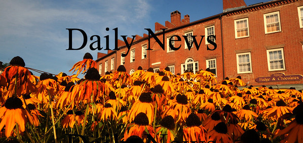 Newburyport: The East Row of buildings in Market Square in Newburyport rise behind blossoming Black-Eyed Susans Friday afternoon. Jim Vaiknoras/Staff photo