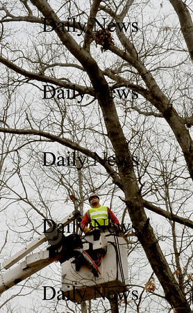 Salisbury: Ralph Tatro of Tatro Tree Removal looks for rotted and dead branches of oak trees at the Long Hill Cemetery in Salisbury on Monday morning. He was hired by the trustees of the cemetery to do the maintenance work. Bryan Eaton/Staff Photo