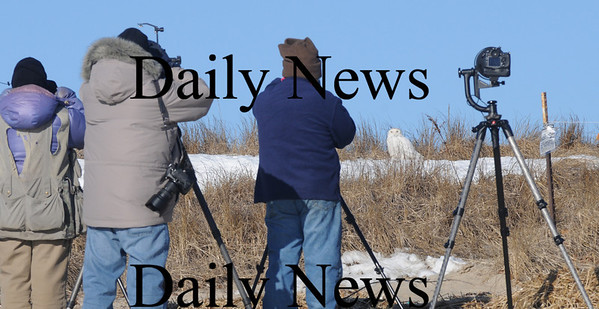 Salisbury: Wildlife photographer on Salisbury Beach Reservation Sunday morning got a treat as a snowy white owl sat still on the dune seeming to pose for the cameras.Photo by Jim Vaiknoras/Newburyport Daily News. Sunday February 15, 2009