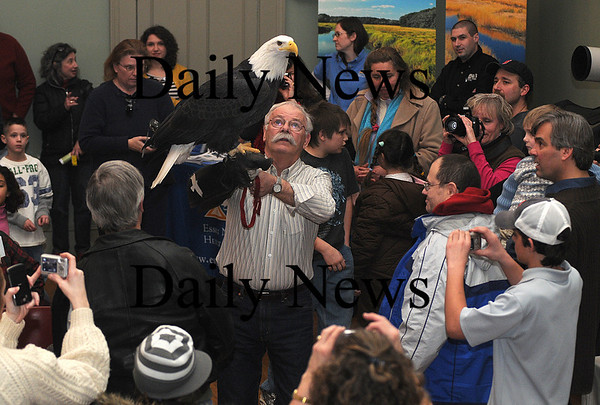 Newburyport:Tom Ricardi holds a bald eagle during a presentation at Newburyport City Hall Saturday as part of the 4th annual Newburyport Eagle Festival photo by Jim Vaiknoras/Newburyport Daily News. February 14, 2009
