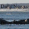 Salisbury: Three grey seals sun themselves on rocks off Salisbury Beach Sunday morning. photo by Jim Vaiknoras/Newburyport Daily News. Sunday February 15, 2009
