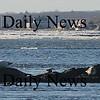 Salisbury: Three grey seals sun themselves on rocks off Salisbury Beach Sunday morning. photo by Jim Vaiknoras/Newburyport Daily News. Sunday February 15, 2009