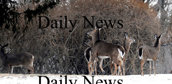 Newbury:<br /> A group of deer were spotted along Route 1A in Newbury on Tuesday morning this week.<br /> Photo by Jim Vaiknoras/Newburyport Daily News Thursday, February 26, 2009