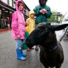 Newburyport: Mikka Phipps, 9, and her brother, Owen, 7, of Newburyport, check out Betty, the three legged sheep during Sunday's farmer's market at the Tannery in Newburyport. Photo by Ben Laing/Staff Photo