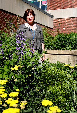Newburyport: Penny Lazarus stands among the flowers at the heritage garden in the courtyard at the Nock Middle School in Newburyport. Photo by Ben Laing/Staff Photo