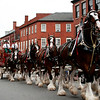 Newburyport: The Budweiser clydesdale's were on parade Friday evening as they marched up State Street in Newburyport. Photo by Ben Laing/staff Photo