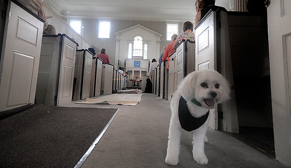 Newburyport: Tess checks out the the happenings at the Blessing of the Animals at the First Religious Society in Newburyport Sunday morning.Tess was brought to the service by Roberta Twomey of NewburyportJim Vaiknoras/Staff photo