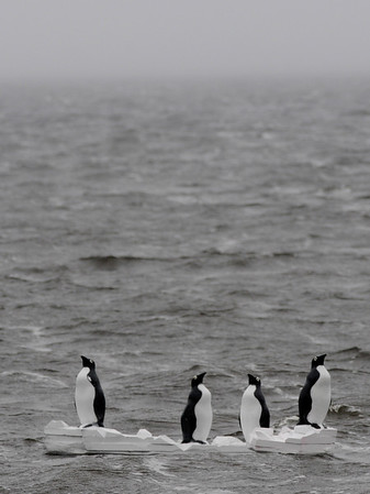 Newburyport: A quartet of plastic penguins on plastic ice flows, bob in the white caps off the Plum Island Turnpike Sunday morning. Jim Vaiknoras/Staff photo