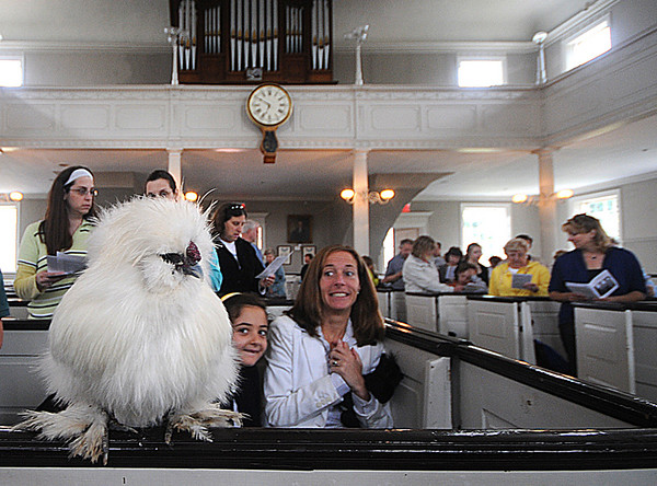 Newburyport: Oliva Dumont, and Gwen Dumont keep an eye on Frankie, a rooster belonging to Orren Fox at the Blessing of the Animals at the First Religious Society in Newburyport Sunday morning. Jim Vaiknoras/Staff photo