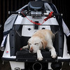 Salsibury: Riley, who belongs to Mike Ferstler, takes a nap on the back of his watercraft before the SeaDoo races at the Sand and Sea Festival on Salisbury Beach Saturday. Jim Vaiknoras/Staff photo