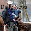 Georgetown: Local farmer Peter Carter and his 16 month old son George inspect their cows at their farm on Jewwet Street in Georgetown. Photo by Ben Laing/Staff Photo