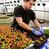 Salisbury:<br /> It may not seem much like spring this week, but in area greenhouses it's a different story. Joshua Beaton, on break from UMass Boston, helps transplant fuchsia autumnale at his grandparent's Pettengill Farm in Salisbury.<br /> Photo by Bryan Eaton/Newburyport Daily News Tuesday, March 24, 2009