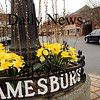 Amesbury:<br /> Daffodils and pussy willows have been placed at the roundabout in Amesbury's Market Square welcoming the start of spring which started at 7:44 a.m. on Friday. The first day of the season, however, will only see temperatures in the high 30's with warmer weather coming later in the weekend.<br /> Photo by Bryan Eaton/Newburyport Daily News Thursday, March 19, 2009
