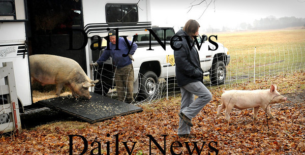 Newbury:<br /> Two pigs from the MSPCA in Methuen were taken to their new residence at the Spencer-Peirce-Little Farm on Monday morning adding the the farm's menagerie. Releasing the pigs are Mike McLaughlin, left, of the farm and Melissa Ghareeb of the MSPCA.<br /> Photo by Bryan Eaton/Newburyport Daily News Monday, March 30, 2009