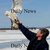 Newbury: Norm Smith of Mass Audubon gets ready to release one of two snowy owls being relocated from Logan Airport to Plum Island.photo by Jim Vaiknoras/Newburyport Daily News. Wednesday, March 4, 2009