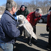 Newbury:A group of birders from the Joppa Flats Audubon Center check out a snowy owl as Norm Smith of Mass Audubon gets ready to release one of two  being relocated from Logan Airport to Plum Island.Wednesday.photo by Jim Vaiknoras/Newburyport Daily News. Wednesday, March 4, 2009