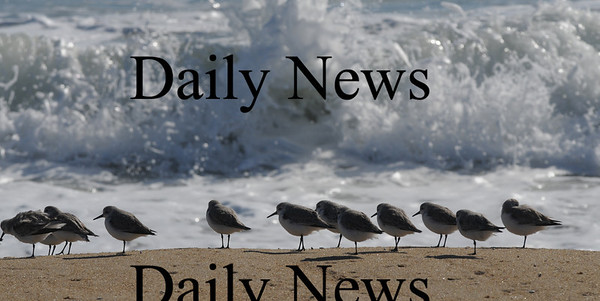 Newbury: Sandpipers scurry along the Beach on Plum Island early Saturday morning.Jim Vaiknoras/staff photo