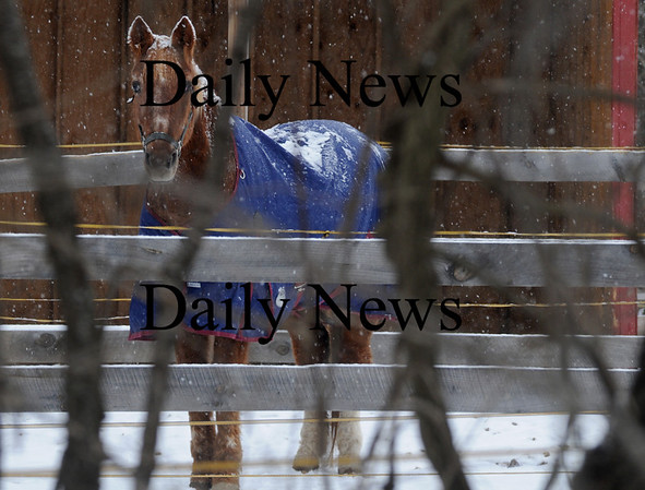 West Newbury: A horse at the Wind Crest Farm in West Newbury stands buddled up against the cold as he is covered in snow Sunday afternoon.photo by Jim Vaiknoras, Newburyport Daily News, Saturday February 28, 2009