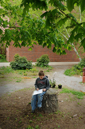 Amesbury: Ian McIntyre, 7, and his first grade classmates sketch the maple tree he's sitting under at the Cashman School in Amesbury on Monday. The students in Ashley Grimes' class are studying and observing the tree throughout the seasons as they learn about plant life cycles.Bryan Eaton/Staff Photo  Newburyport News  Monday May 11, 2009.