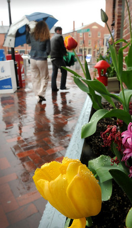 Newburyport: The plants in the flower boxes on State Street in Newburyport were speckled with raindrops yesterday as many people  carrying their umbrellas were seen. The wet weather continues off and on into the weekend. Bryan  Eaton/Staff Photo   Newburyport News   Tuesday May 5, 2009.