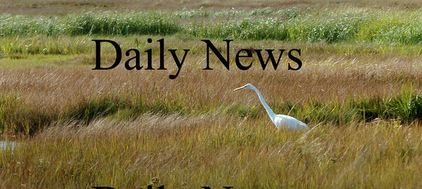 Newbury: A great egret moves along the marsh at Parker River National Wildlife Refuge looking in the mud for a snack. Bryan Eaton/Staff Photo