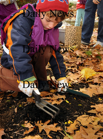Newburyport: Ronan Brown, 5, digs up some earth under leaves at a green area off Inn Street in Newburyport. He and other children from the Newburyport Montessori School were planting tulip and daffodil bulbs in hopes of seeing them pop out of the ground in the spring. Bryan Eaton/Staff Photo