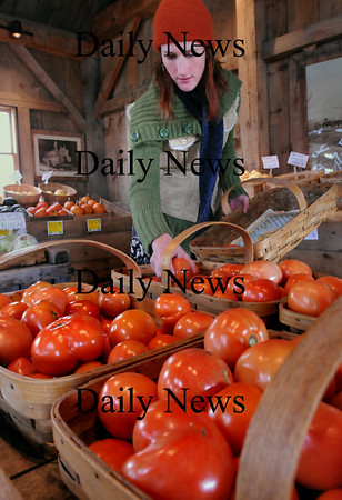 Salisbury: Jessica Soucy puts out tomatoes at Bartlett's Farm in Salisbury on Thursday afternoon. The farm had picked all their tomatoes on Wednesday in anticipation of the frost that gripped the area. Tomatoes that aren't completely ripe can be put into brown paper bags and will ripen further. Bryan Eaton/Staff Photo