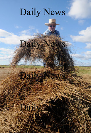 "Newbury:Channing Howard of Newbury stacks hay during a Trails and Sails demonstration ""Making Hay in the Sunshine"" along the Plum Island Turnpike Saturday. Jim Vaiknoras/Staff photo"