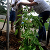 Amesbury:Lowes volunteers Tony Stewart and Melissa Wrobel install a fence at the  salsa garden at the Cashman school in Amesbury Wednesday. Lowes Home Improvement awarded a Heroes grant to CES and visited the school on Sept. 15 & 16 to install a picket fence for the Pumpkin Patch and Salsa Gardens; They'll also provide plants and materials for the fall garden maintenance.Jim Vaiknoras/Staff photo