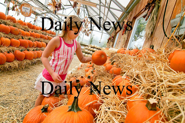 Newbury: Catherine Niziak, 8, of Merrimac, looks over the pumpkins at Tendercrop Farm on Wednesday afternoon. Photo by Ben Laing/Staff Photo