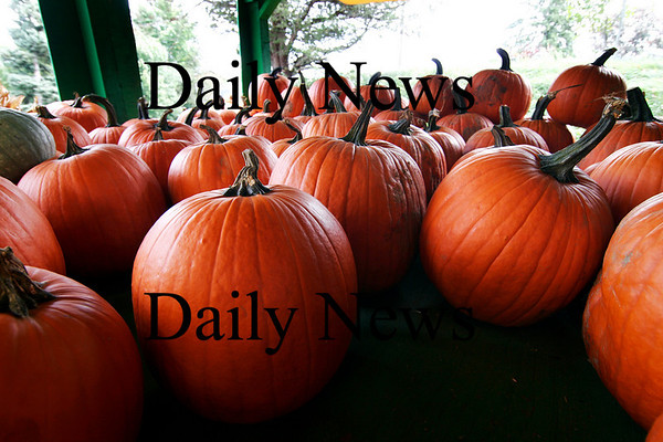 Newbury: Iron Moon Farm in Newbury has plenty of pumpkins for sale this season, however, pumpkins in the area are expected to be smaller than normal due to a weak crop. Photo by Ben Laing/Staff Photo