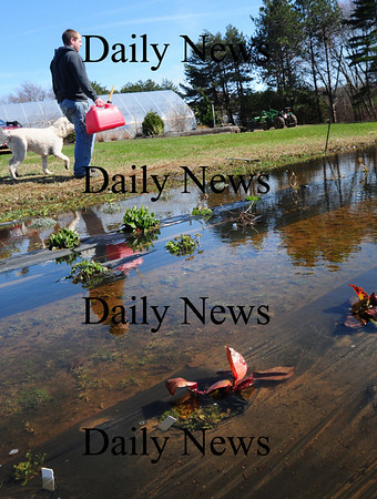 Salisbury: Patrick Hussey and Molly walk past plants submerged in water at Pettengill Farm on Ferry Road in Salisbury. The farm, which now specializes in flowers and ornamental plants and was founded in 1792, often gets flooded fields, but not to the extent of recent weeks. Bryan Eaton/Staff Photo
