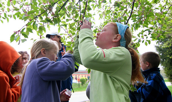Newbury: Morgan Mead, right, and Katy Hylton, left, study the branch of a cherry tree outside Newbury Elementary Tuesday morning. The pair are first graders in Kristin Mollineaux's class and were studing plants with the help of Lisa Hutchings of the Joppa Flats Education Center. Photo by Ben Laing/Staff Photo