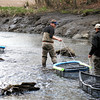 Newbury: Volunteers from Trout Unlimited, a non-profit conservation agency, bring traps filled with trout down river in an effort to restock the Parker River in Newbury. Photo by Ben Laing/Staff Photo