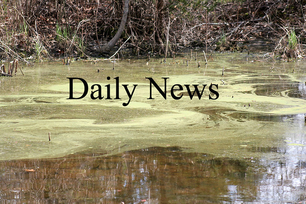 Newbury: A small pond along Hay Street in Newbury is saturated with pollen as Spring approaches. Photo by Ben Laing/Staff Photo