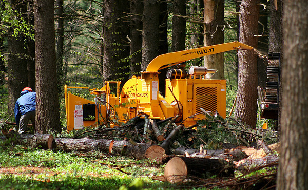 Newburyport: Workers load brush and downed tree limbs into a wood chipper at Maudslay State Park Wednesday afternoon, as they begin cleaning up the damage from last months storms. Photo by Ben Laing/Staff Photo
