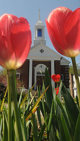 Salisbury: Tulips frame the Star of the Sea Church in Salisbury on a bright spring morning Saturday. Jim Vaiknoras/Staff photoi