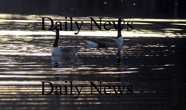 West Newbury: A pair of geese rest in the late afternoon sun on Mill Pond in West Newbury Thursday night. Jim Vaiknoras/Staff photo