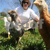 Newbury: Mary Carpenter with some of the chickens at New Eden at the First Parish Church in Newbury. Jim Vaiknoras/Staff photo