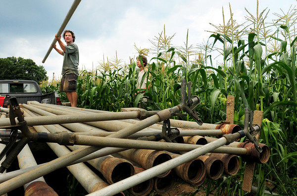 South Hampton: Andre Cantelmo of Heron Pond Farm in South Hampton hands off irrigation pipes to Ben Jewell in a cornfield they rent a mile from the farm. Cantelmo says that they've had to irrigate some fields for the first time because of the lack of rain. Bryan Eaton/Staff Photo