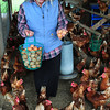 Amesbury: Karen Cook retrieves some eggs from the 300 laying hens at Cider Hill Farm in Amesbury. Bryan Eaton/Staff Photo