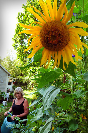 Newbury: Choo Whyte has to keep up with watering the several flower and vegetable gardens around her Cottage Road, Newbury home. The artist and gardener also maintains several privately-owned historical gardens on High Street in Newburyport. Bryan Eaton/Staff Photo